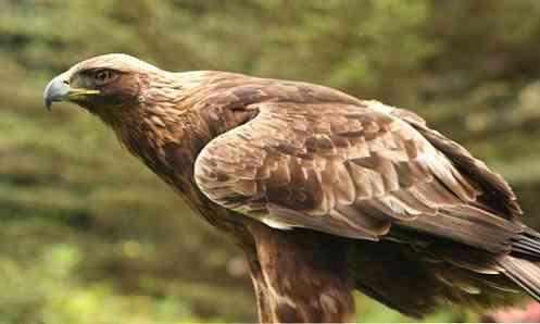 fauna-de-mxico-los-10-animales-ms-caractersticos_11.jpg