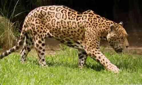 fauna-de-mxico-los-10-animales-ms-caractersticos_2.jpg