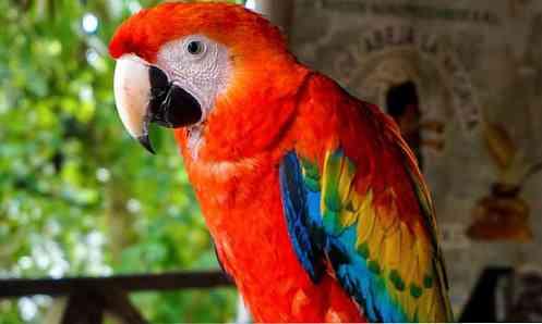 fauna-de-mxico-los-10-animales-ms-caractersticos_3.jpg