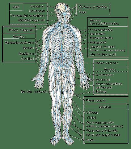 A fájdalom típusai: szomatikus és zsigeri fájdalom - fájdalomportávoxhungaria.hu
