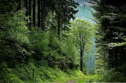 الغابات المعتدلة المميزة الموقع النباتات الحيوانات المناخ بيئة Thpanorama تجعل نفسك أفضل اليوم