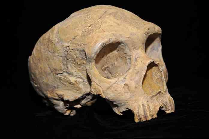 Technieken van het dateren van fossielen