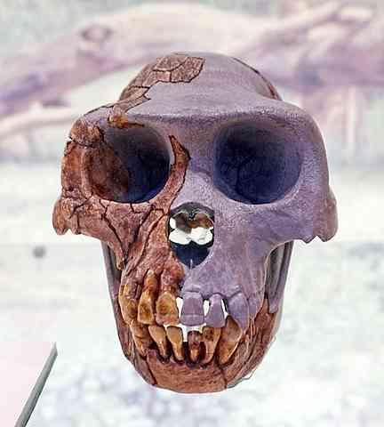 Fosili nađeni u marokanskom Jebel Irhoudu najstariji su ostaci čovjeka i.